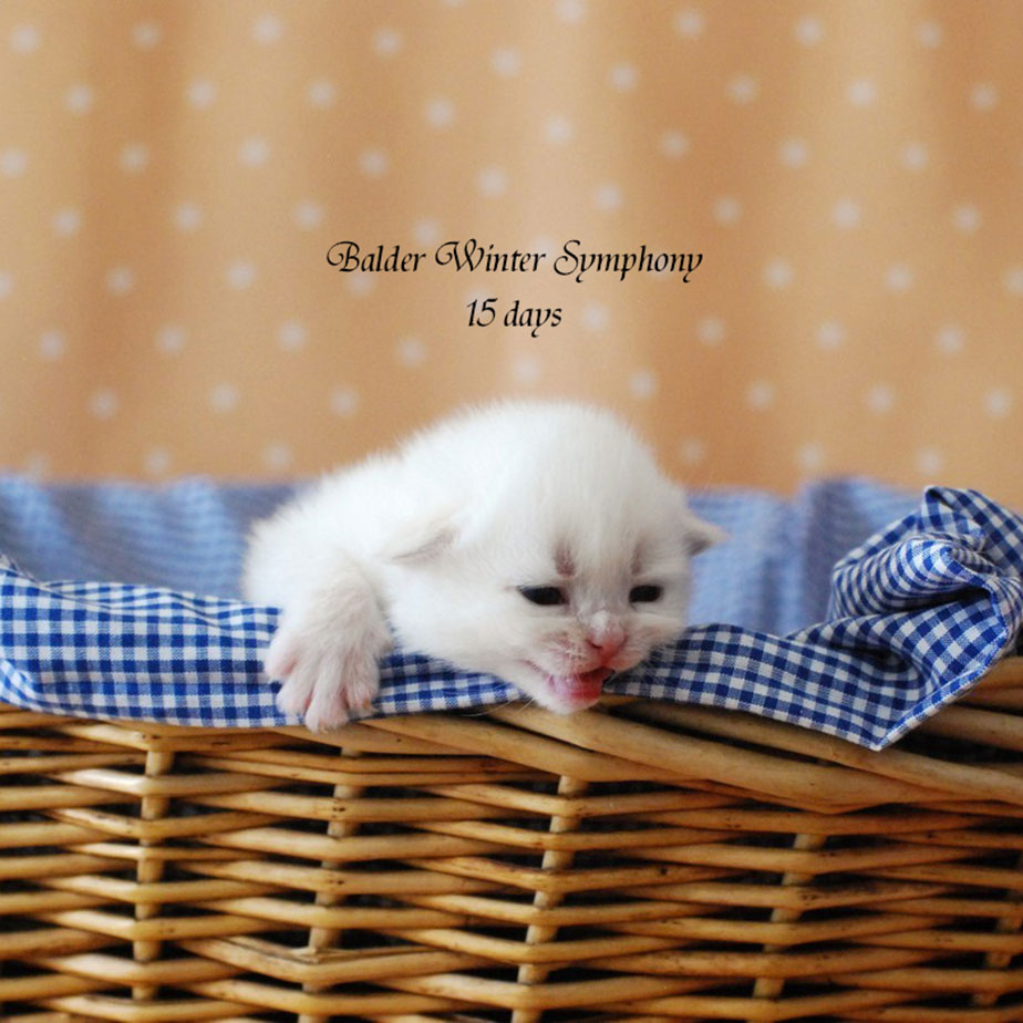 balder-winter-symphony