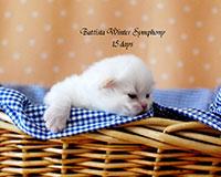 Battista Winter Symphony
