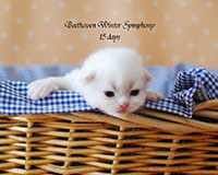 Beethoven Winter Symphony
