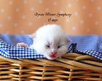 Byron Winter Symphony