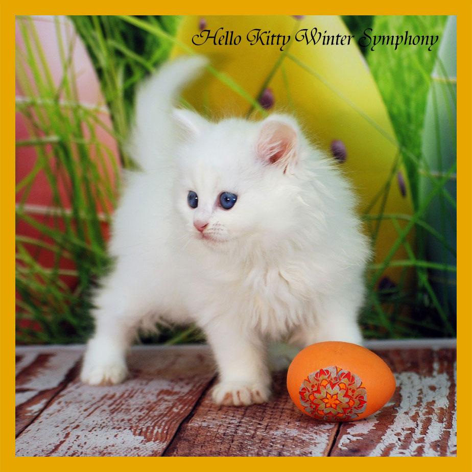 hello-kitty-winter-symphony